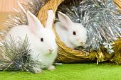 stock photo of tawdry  - Two white rabbits in basket against trumpery on green - JPG