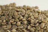 ungerösteten Kaffeebohnen