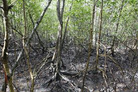 stock photo of ecosystem  - view of mangue tropical ecosystem in bahia brazil - JPG