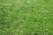 A beautifully cut field of summer grass. Perfect for spring or summer background