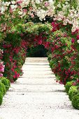 stock photo of garden eden  - In the Garden - JPG