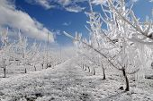 Frost Protection And Snow
