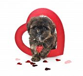 stock photo of poo  - Cute Yorkie  - JPG