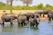 Scenic View Of A Busy Waterhole With A Large Herd Of Elephants Cooling And Bathing To Try And Keep C poster