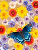 Abstract background image of colorful flowers floating in water, with a blue butterfly