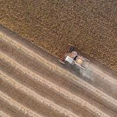 Harvester Machine Working In Field . Combine Harvester Agriculture Machine Harvesting Golden Ripe So poster