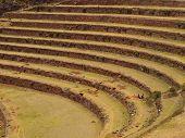 Inca agriculture terraces in Peru