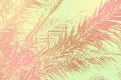 Abstract Tropical Nature Background. Long Palm Tree Leaves Sky. Vintage Pink Gray Green Toned Faded  poster