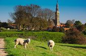 stock photo of veer  - A meadow scene from Dutch town Veere from the outskirts of town - JPG