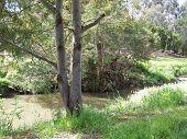 Australian Urban Creek