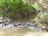 Australian Creek - Landscaped