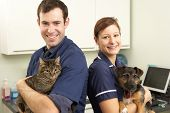 stock photo of vets surgery  - Male Veterinary Surgeon And Nurse Holding Cat And Dog In Surgery - JPG