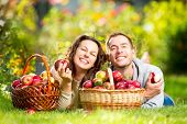 Happy Couple Eating Organic Apples in Autumn Garden.Healthy Food.Outdoors.Park. Basket of Apples.Har