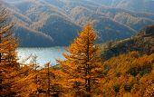 foto of sakhalin  - The Autumn landscape on island Sakhalin - JPG