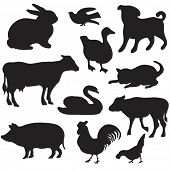 Silhouettes of hand drawn farm animals. Dog,  cat, duck, rabbit, cow, pig, cock, hen, swan, puppy, k