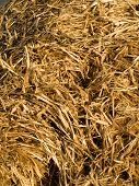 Wet Hay Straw Background