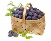 Blue Plums In A Wicker  Basket