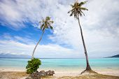 Palm trees on a beach at Moorea island in French Polynesia