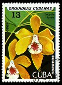 Cuba - Circa 1980: A Stamp Printed In The Cuba Shows Brown Veined Encyclia, Encyclia Fucata, Orchid,