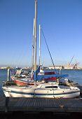 Sailboats In A Harbor San Pedro California.