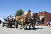 Draft Horses In Parade.