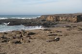Elephant Seals on California Beach in Winter