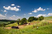 summer Landscape Unterbodnitz