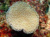 stock photo of cebu  - Underwater inhabitants of sea depths of strait Cebu - JPG