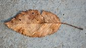 Fallen Brown Leaf On Concrete Floor (16:9 Aspect Ratio)