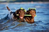 two dogs in snorkeling equipment