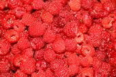 Ripe juicy large raspberries background
