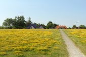 The Field With A Lot Of Yellow Flowers