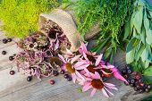 Bunches Of Healing Herbs And Coneflowers On Wooden Plank