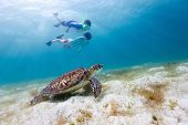 stock photo of sea-turtles  - Underwater photo of family mother and son snorkeling and swimming with Hawksbill sea turtle - JPG