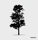 Tree silhouette. Vector illustration.