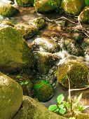Stones In Woods Forest. Stream In Gdansk Oliva Park.