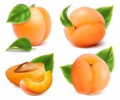 Apricots with green leaves and water drops. Vector set. Vector illustration.