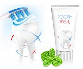 White tooth, toothbrush, toothpaste and fresh green mint. Dental concept.  Vector illustration.