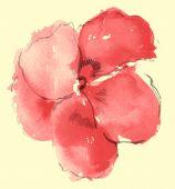 Watercolor Of Sakura