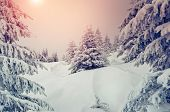 Amazing evening winter landscape. National Park. Carpathian, Ukraine, Europe. Beauty world. Retro st