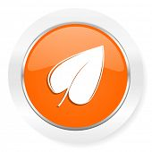 leaf orange computer icon