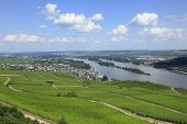 Vineyards on the Rhine river Valley