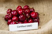 stock photo of food label  - food labeling concept with bright red cherries and a GMO label - JPG