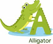 Illustrator of A with alligator
