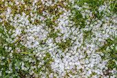 picture of hail  - The pieces of hail on the grass - JPG