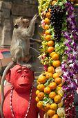 Thailand Monkey party (Thailand Monkey Buffet ).