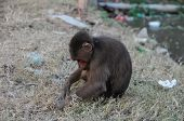 Monkey in Chains in Vietnam