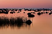 Rocks And Reeds In The Sea At Sunset