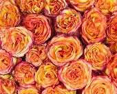 Flower Bouquet From Yellow Red Roses For Use As Background.