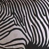 vector abstract old paper background with animal zebra pattern f